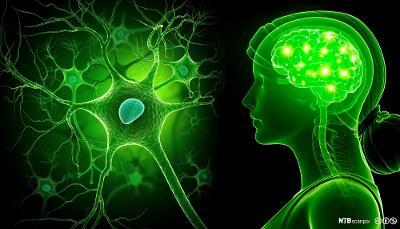Illustrasjon av et menneskes hjerne og nerveceller. illustrasjon.