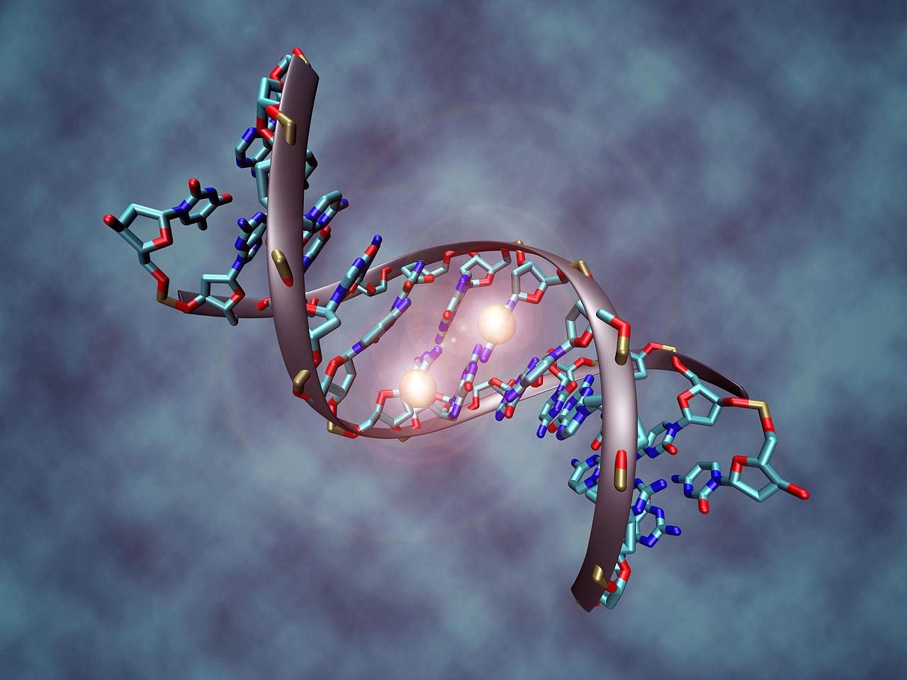 DNA-sekvens med metylgrupper som blokkerar avlesing av eit gen. Illustrasjon.