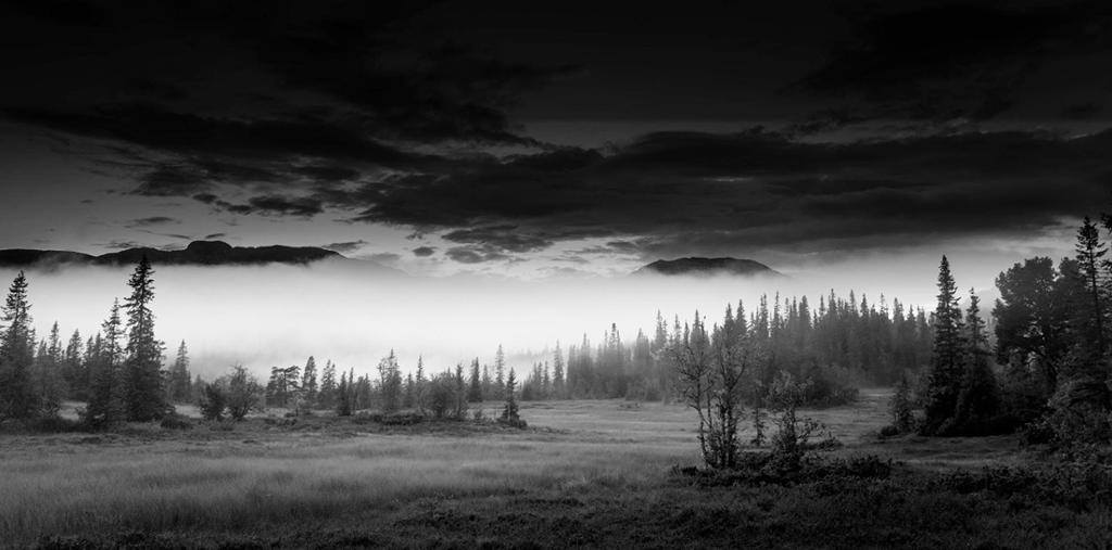 Tåka ligger nede i skogen. Foto.