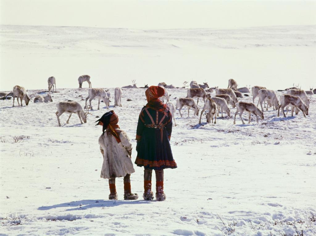 Samer med reinsdyr på snødekt vidde. Foto.