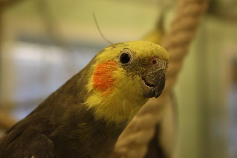 Papegøye. Foto