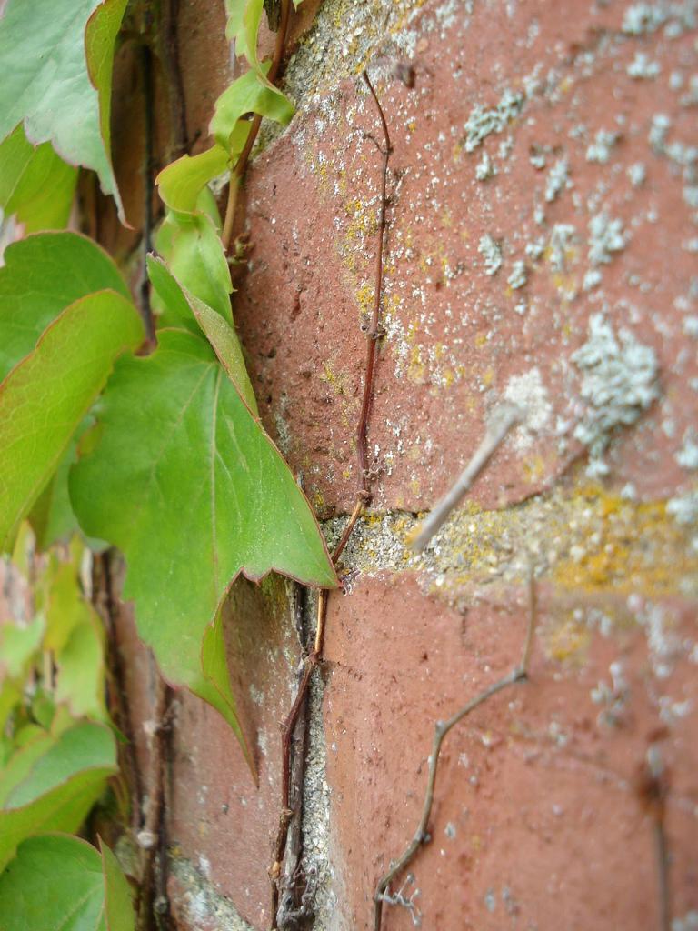 Ivy.photo.