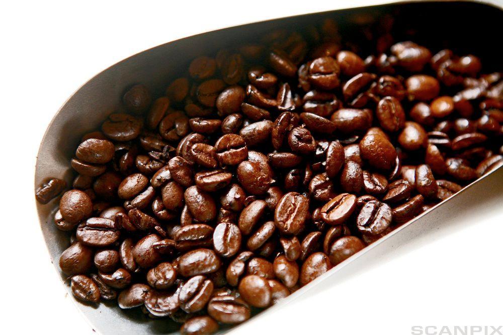 Kaffibønner. Foto.