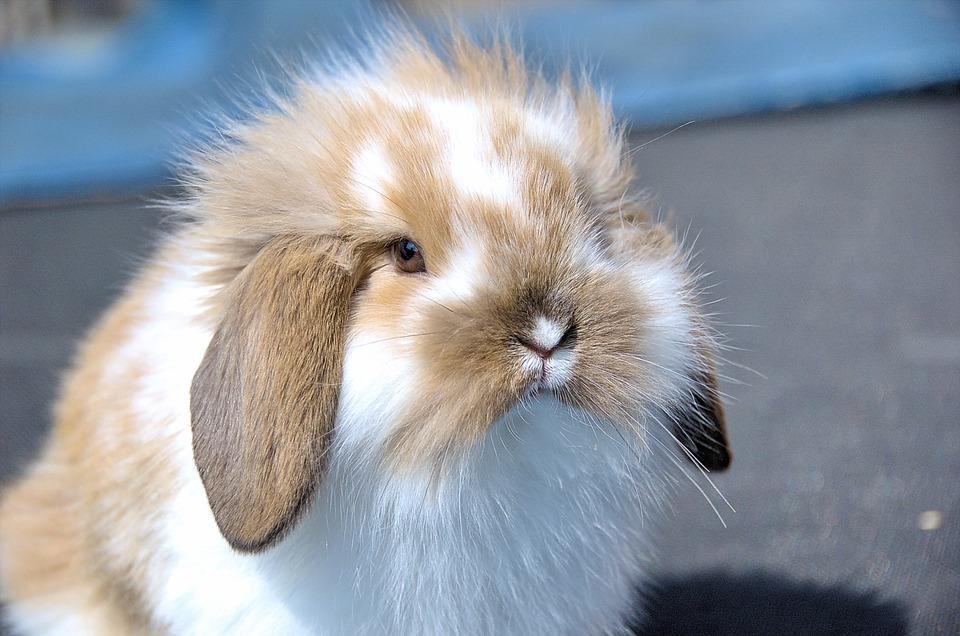 Nærbilde av kanin. Foto.