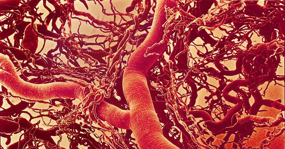 Kapillærer som forgreiner seg fra større blodårer