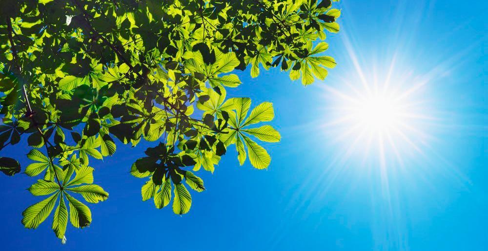Kastanjeblad som bader i sollys. Foto.