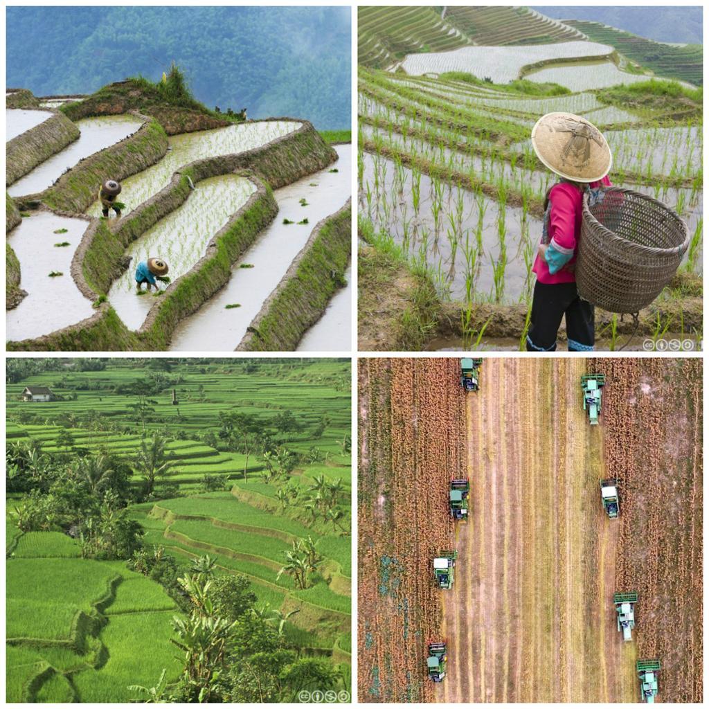 Naturbilder fra kinesisk landbruk. Foto.