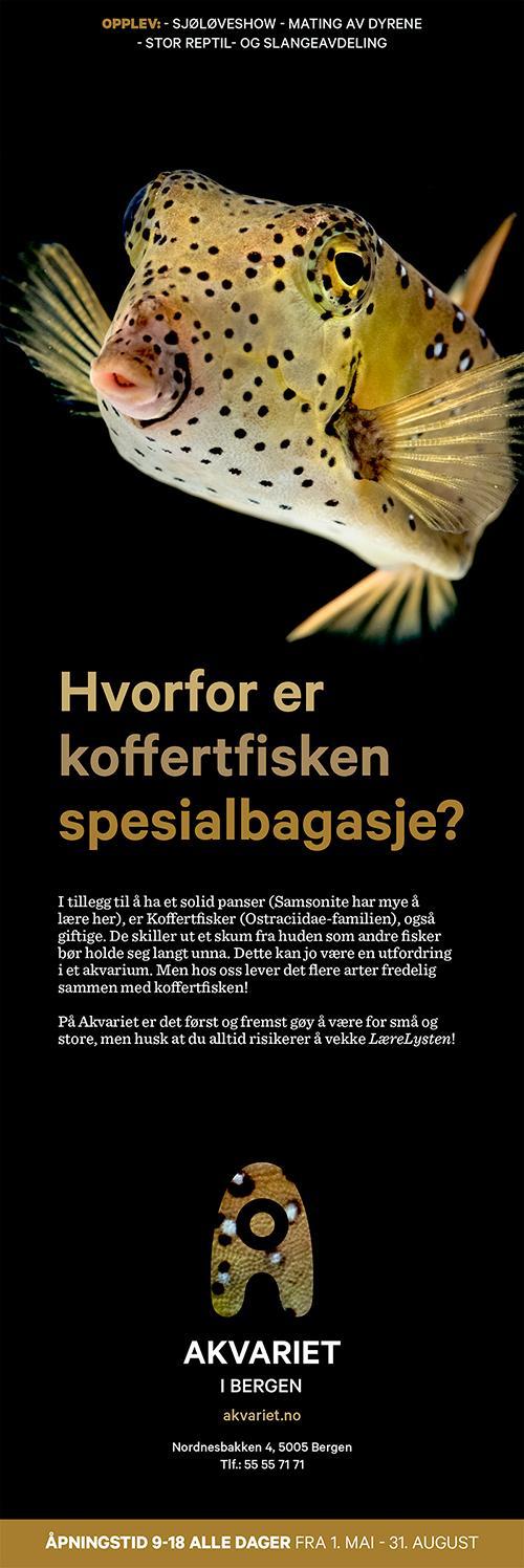 Annonse med bilde av koffertfisk og tekst. Faksimile.