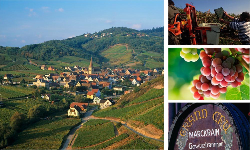 Kollasj: med bilder fra Alsace. Høsting av vindruer og landsbyen Niedermorschwihr.