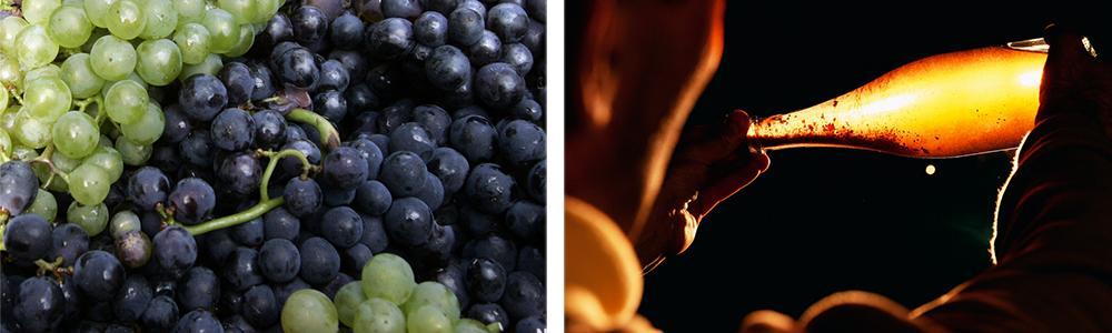 Kollasj: druer og champagne