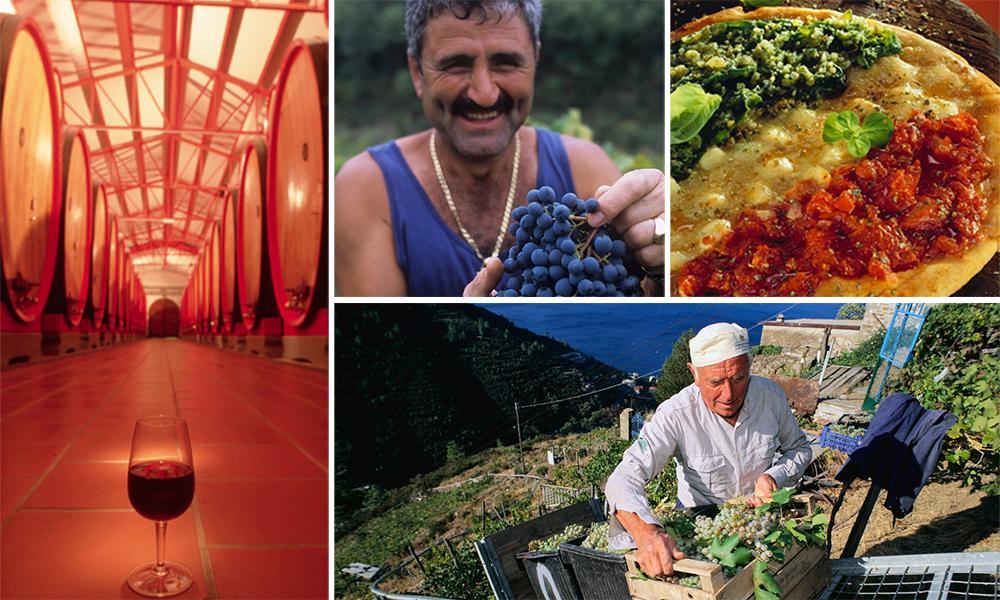 Stemningsbilder fra Italia. Produksjon av vin i fjellet. En mann med blå druer i hendene. Bilde fra en vinkjeller.