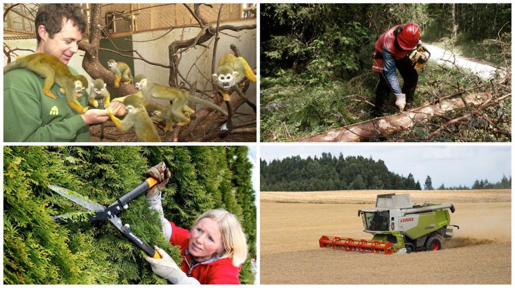 Fire arbeidsoppgaver i naturbruk. Fotokollasj
