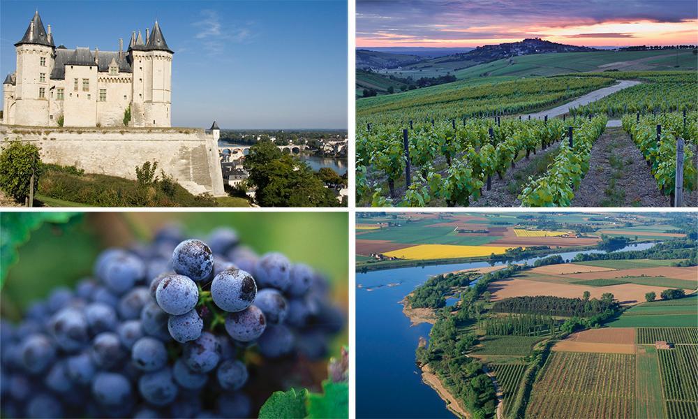 Kollasj med vinranker og landskap fra Loire, slottet Chateau de Saumur og blå druer.
