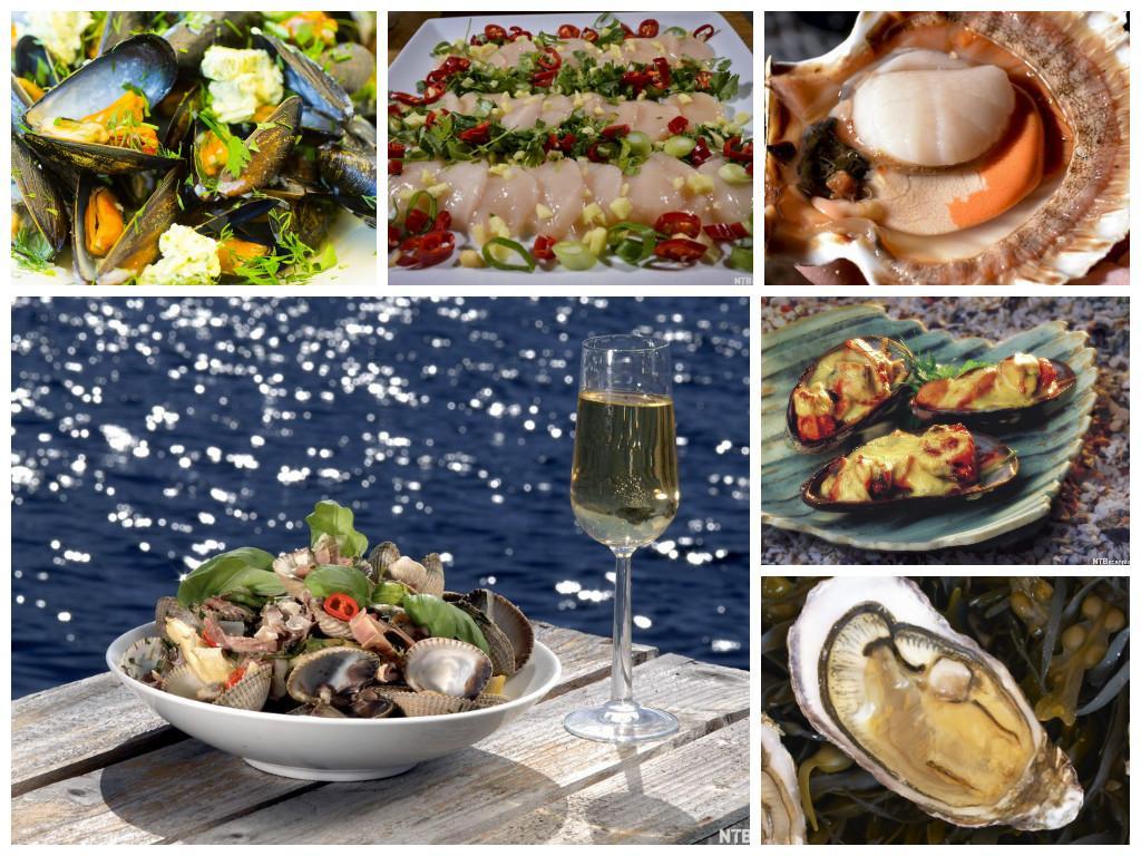 kollasj av bilder med muslinger, dampede blåskjell, kamskjell, oskjell, hjerteskjell og østers