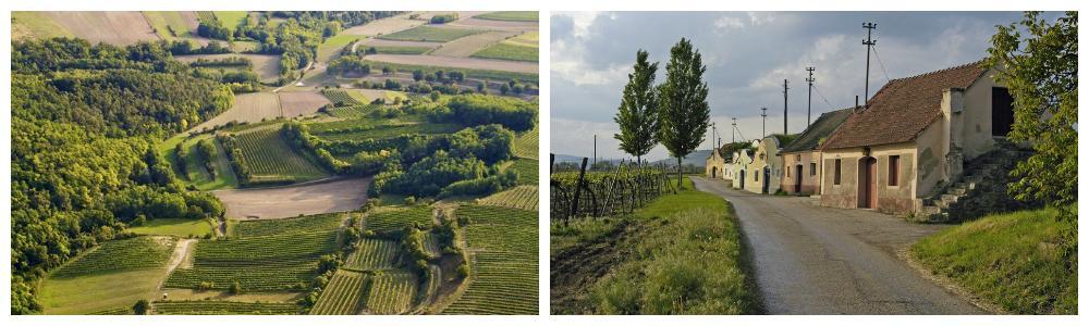 Landskapsbilder av vinområdet Niederösterreich. En liten landsby og vinranker.