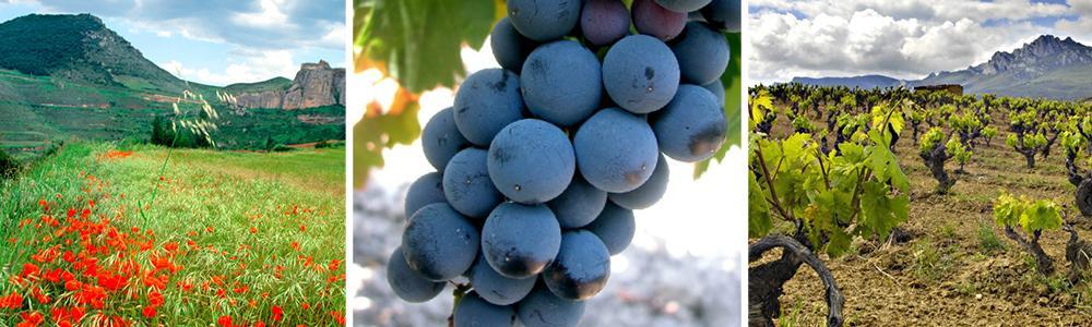 Stemningsbilder fra Rioja. Fjellandskap og druer.