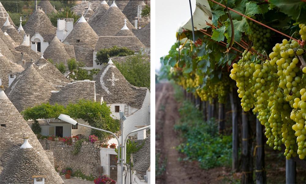 Hustak i byen Alberobello og grønne druer i Puglia.