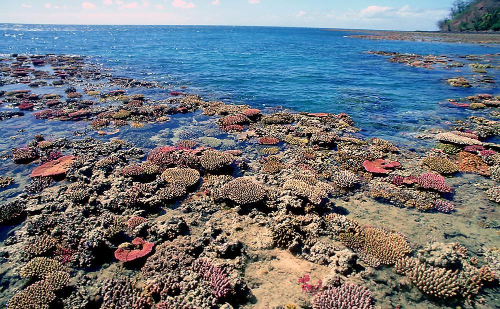 Korallrev fra Fiji