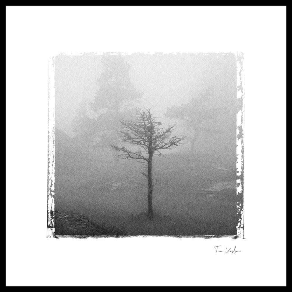 Kunstfoto av et tre i tåke. Foto.