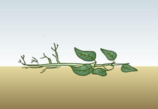 Plante som er lagt horisontalt på bakken