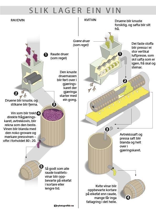 grafisk framstilling av vinproduksjon både rød og hvit