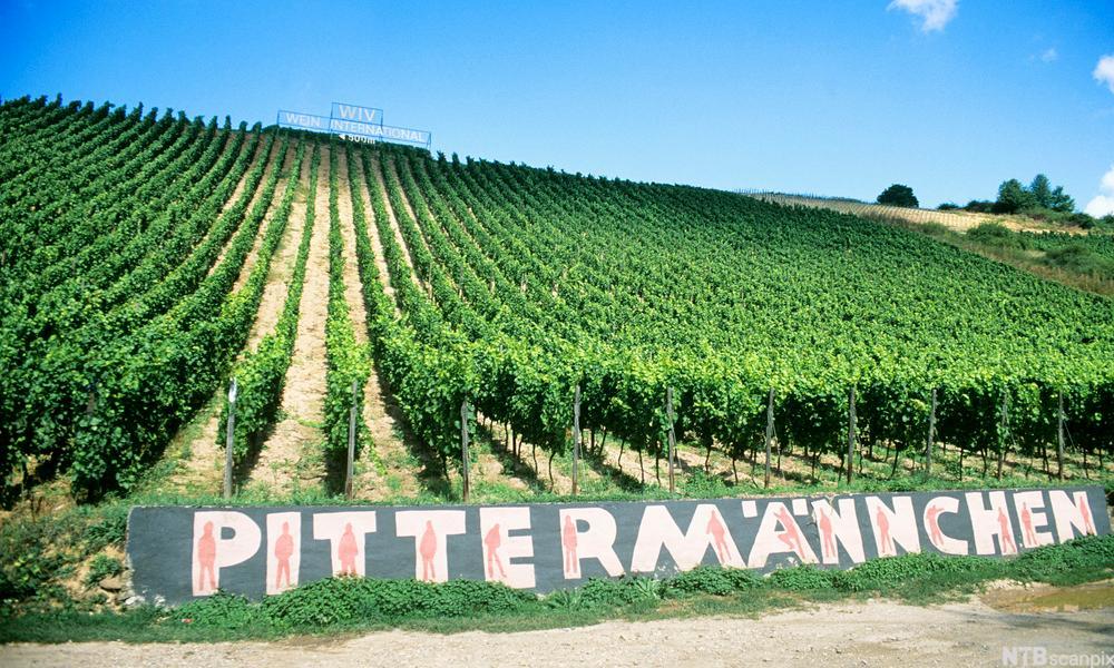 Bilde av et lite vinområde et såkalt Einzellage.
