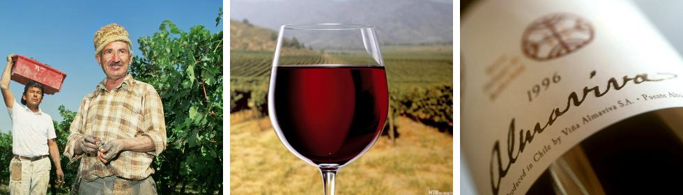 Kollasj: Bilder fra vinproduksjon i Chile. Et glass med rødvin ute på marken og to menn som arbeider.