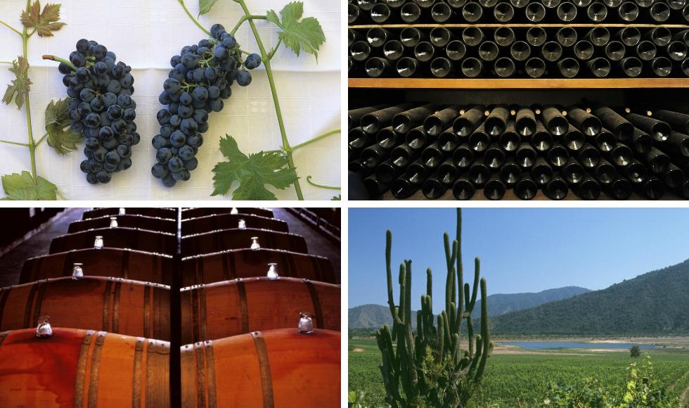 Kollasj: vinproduksjon i Sør-Amerika