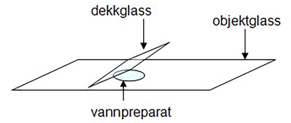 Illustrasjon av hvordan objektglasser legges på.