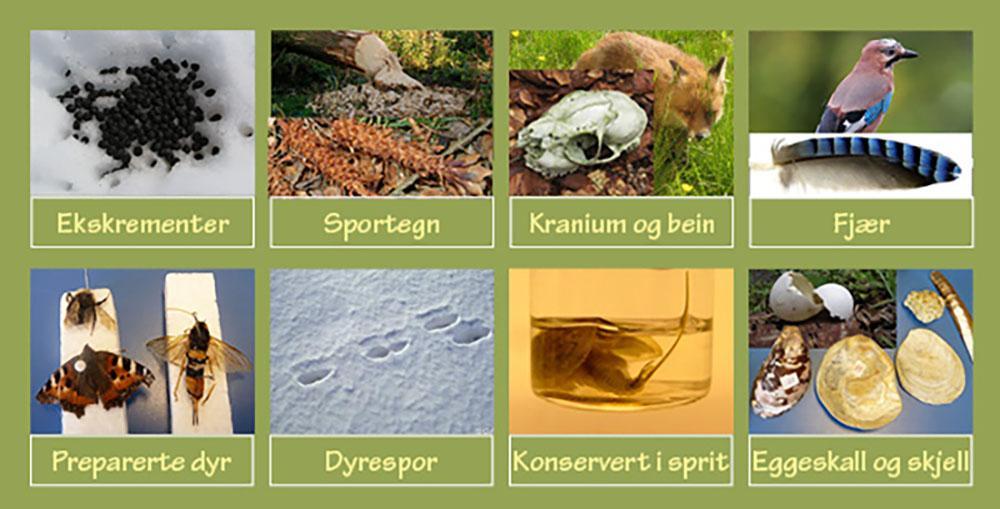 Preparater av dyr, spor og sportegn. Foto.