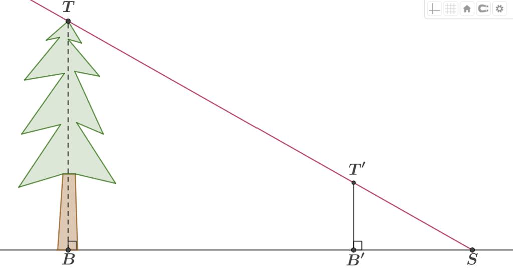 Formlike trekanter ved beregning av høyde på et tre. Illustrasjon