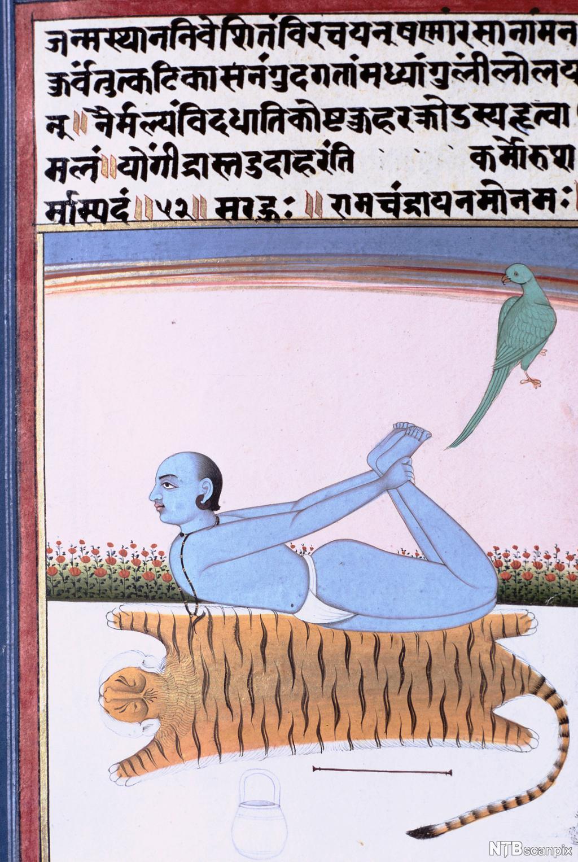 Indisk tekst med illustrasjon som viser mann som ligger på magen og holder i anklene siden bak ryggen. Maleri.