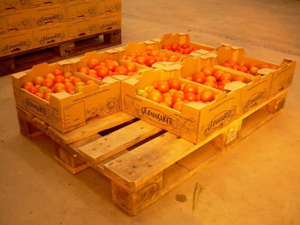 Tomater på paller. Foto.