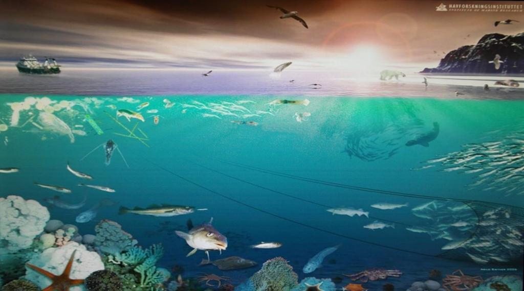 Tegning, plansje med oversikt over arter i havet.