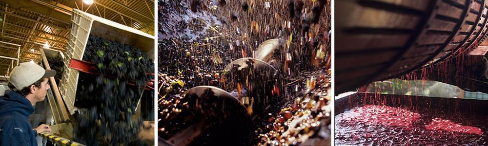 Kollasj: produksjon av rødvin