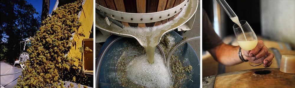 Kollasj: produksjon av hvitvin