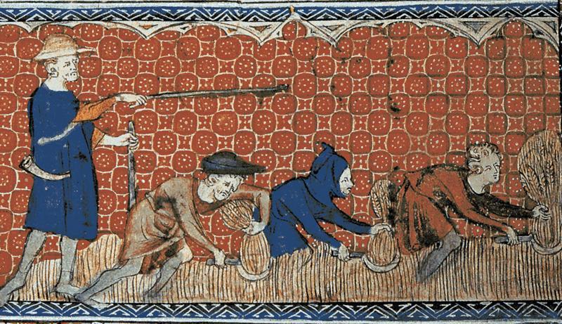 Menn som høster hvete med en person over dem og styrer arbeidet. Illustrasjon fra middelalderen.