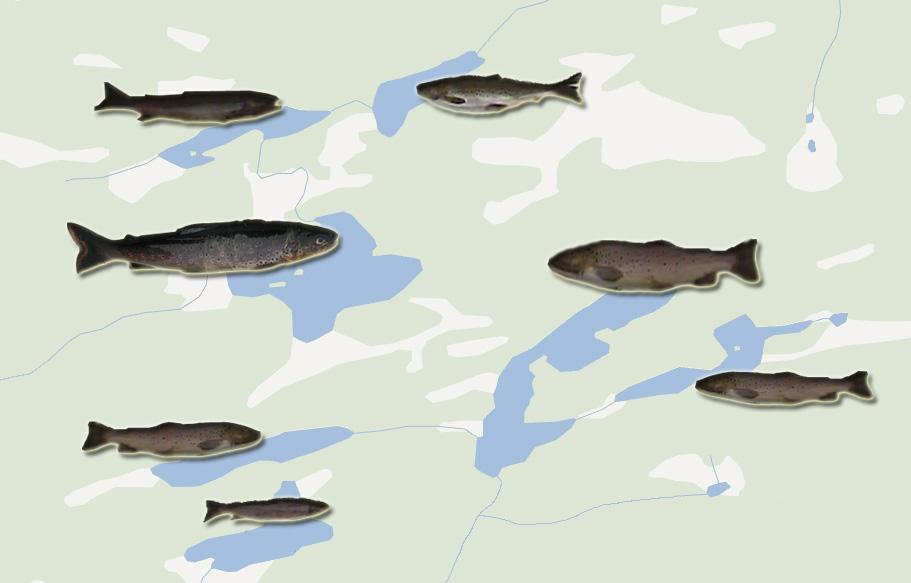 Kart over vann med ulike ørretpopulasjoner. Illustrasjon