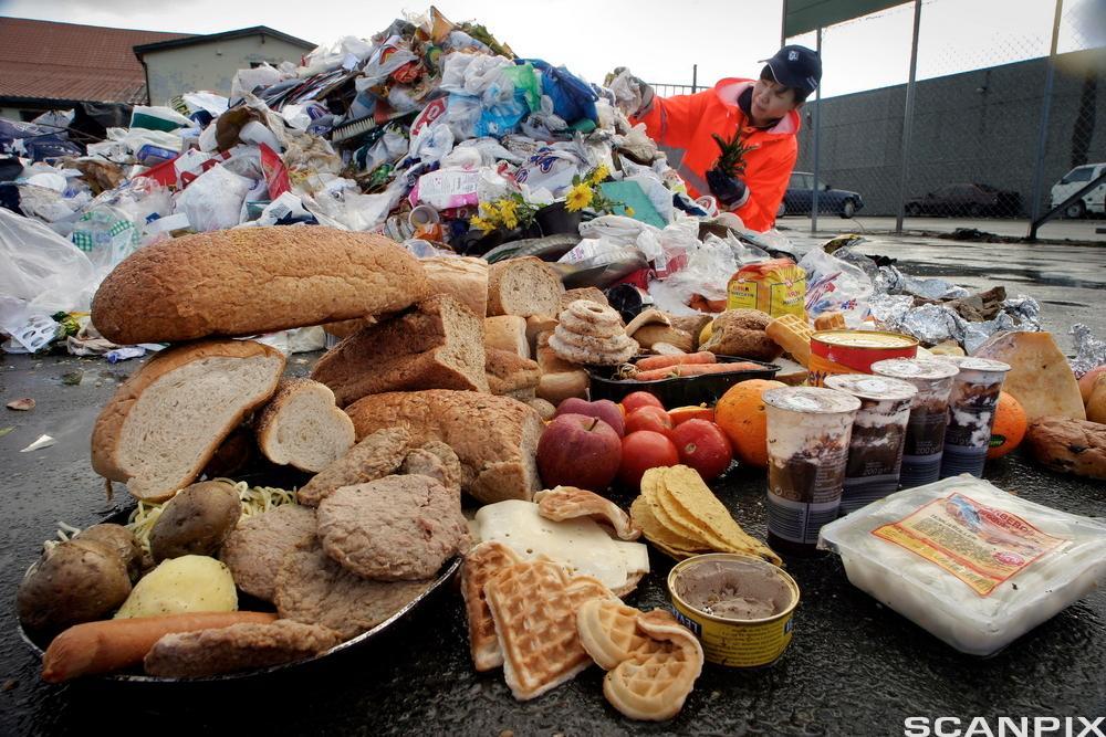 Matsøppel. Foto