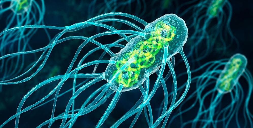 Tegning av svømmende bakterier med mange lange flageller. Foto.
