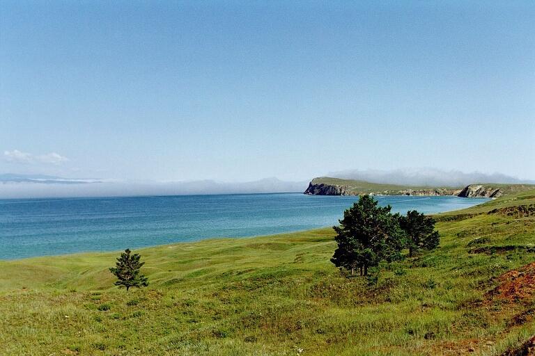 Baikaljaevrie Sibiresne. Guvvie.