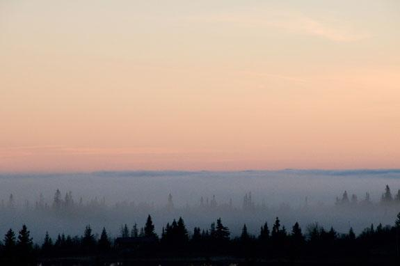 Solnedgang i skogen