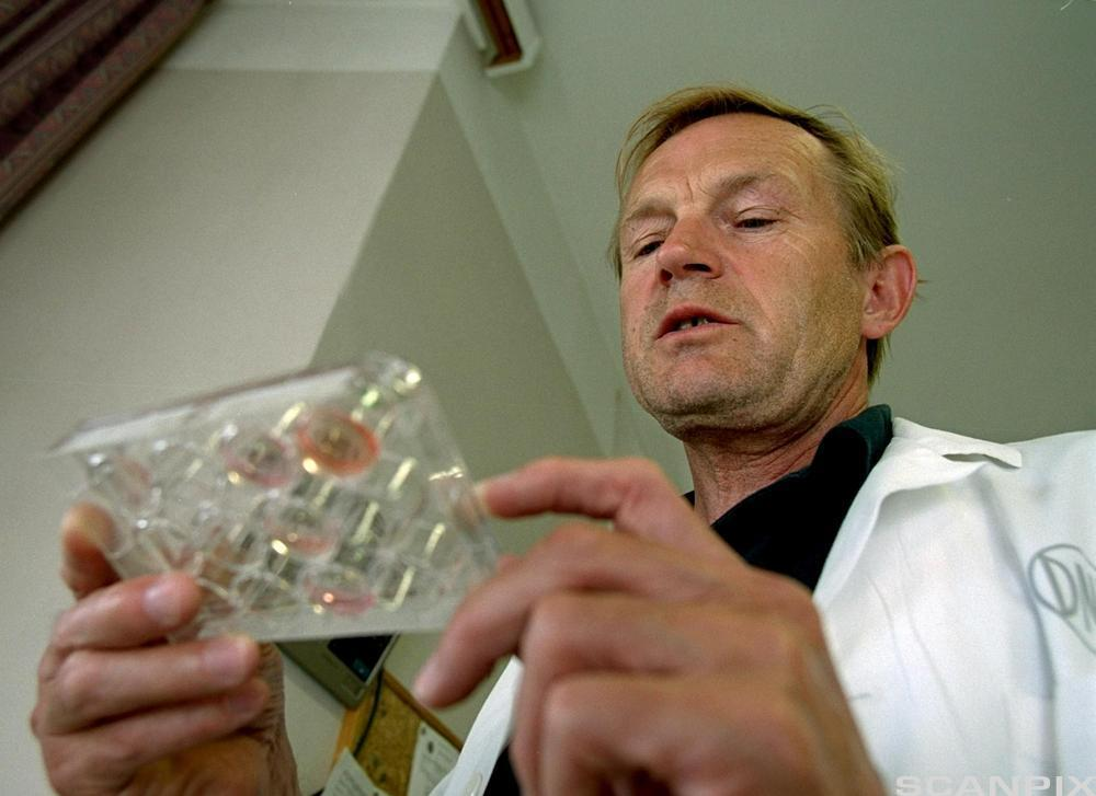 Ein forskar som studerer eit brett med stamceller. Foto.