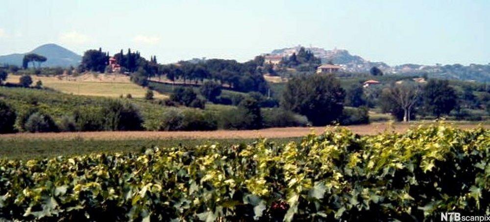 bilde av Vinmarker rundt Montepulciano