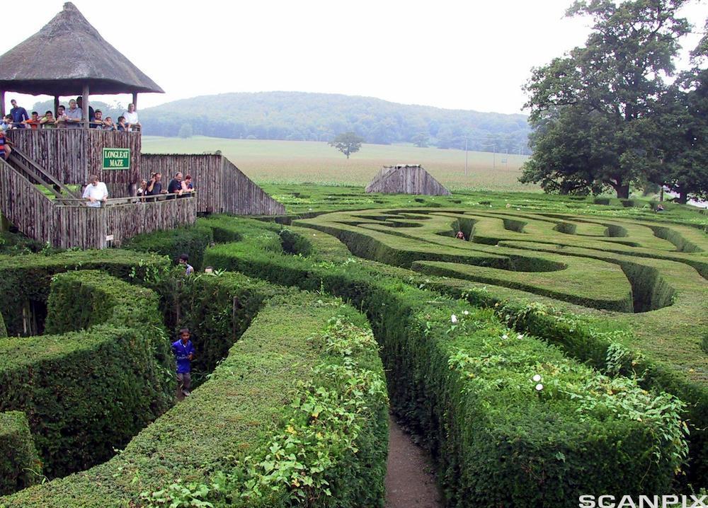 En labyrint laget av hekker. Foto.