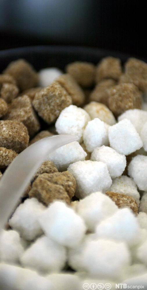 Brune og kvite sukkerbitar i ein klump. Foto.