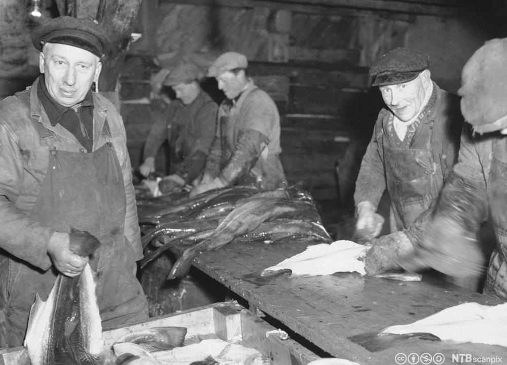 Bildet er i sort-hvitt og viser karer som jobber med fisken.