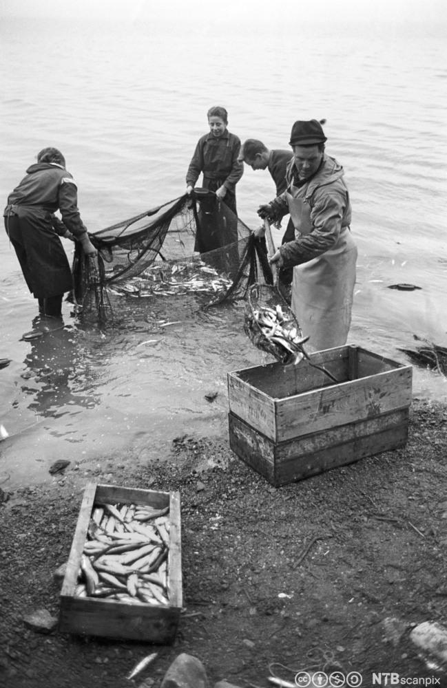 Ein familie fiskar sild på Mjøsa. Foto.