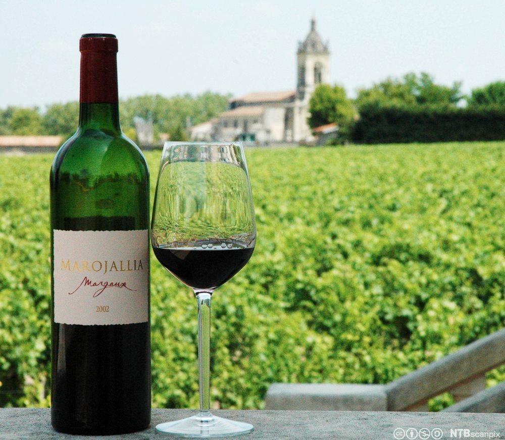 En flaske rødvin foran en vingård. Foto.