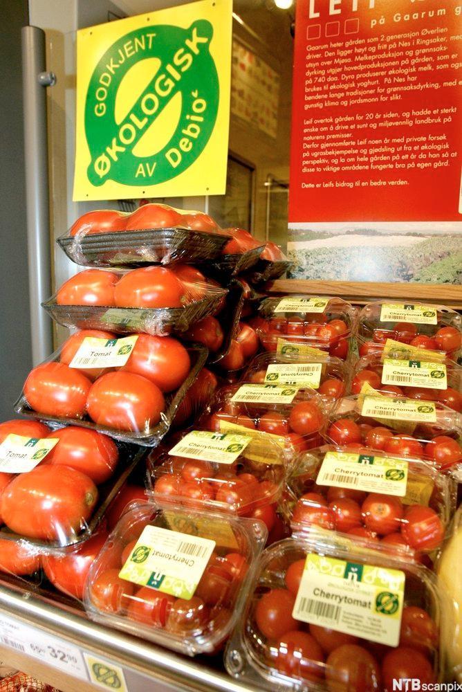 Bilete av økologiske tomatar. Foto.